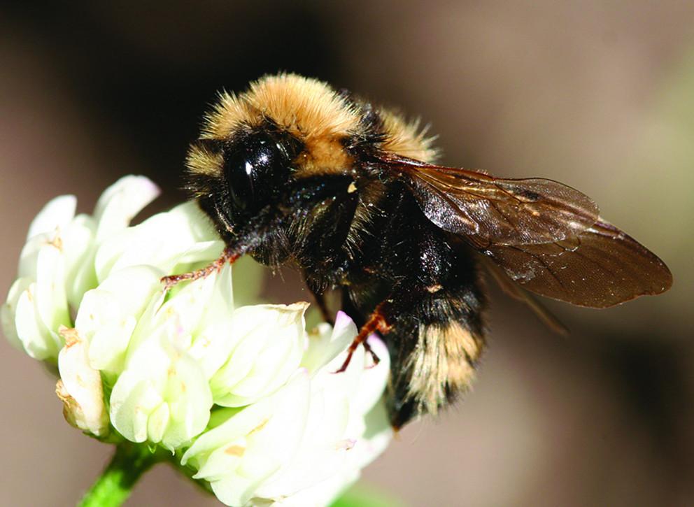Bee Pollution USDA.jpg