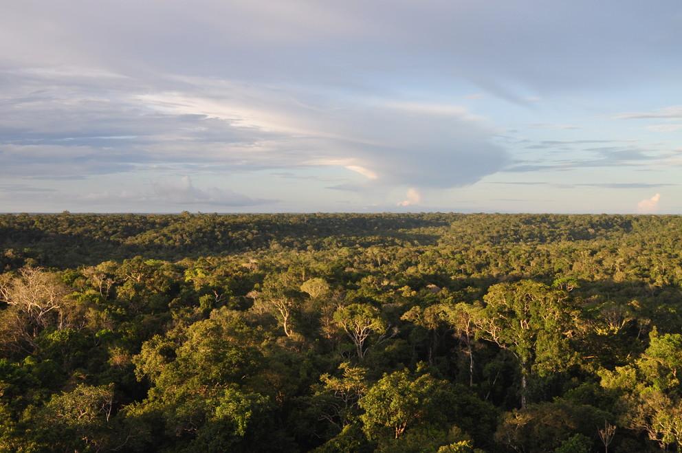 Canopy above the Amazon Rainforest